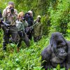 5 Tips to Make the Most of your Gorilla Trek